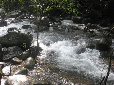 Vythiri Resorts stream