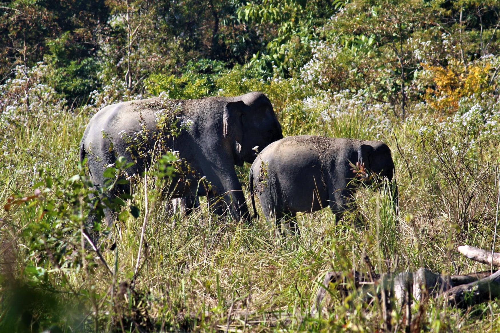 Maozigendri Ecotourism Society revived Manas National Park