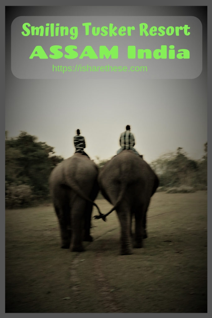 Smiling Tusker Elephant Camp