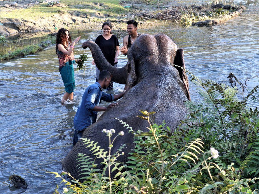 Smiling Tusker bathing the elephant