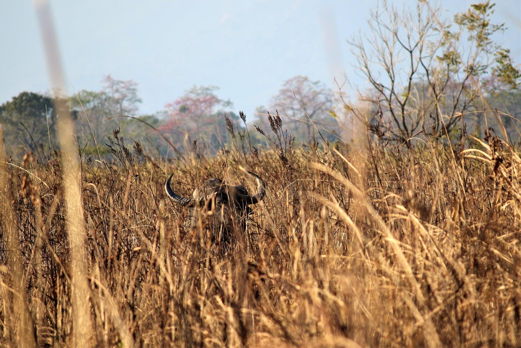 Revival of Manas National Park