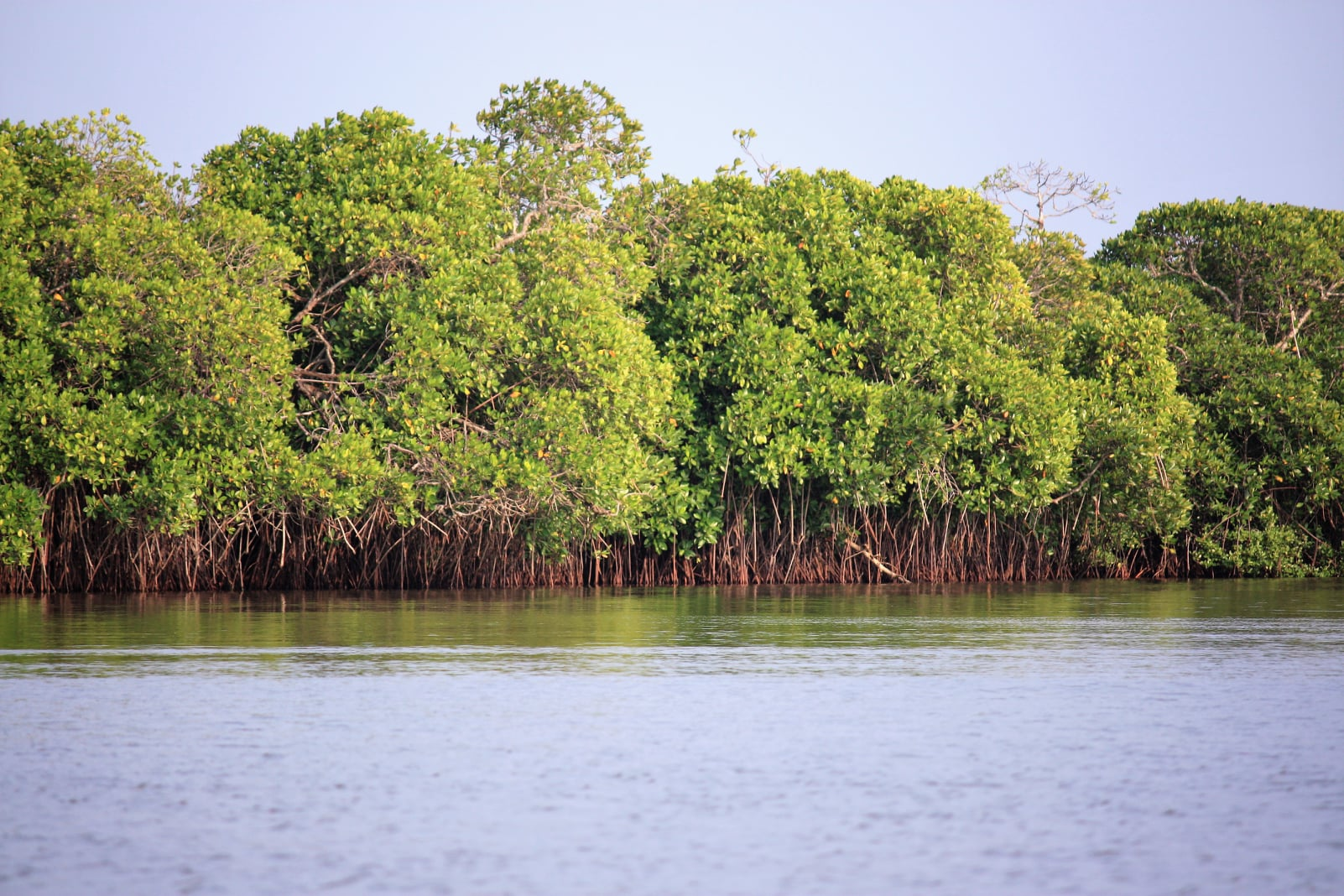 Eco Tourism at Pichavaram Mangrove Forest in Tamil Nadu - i Share